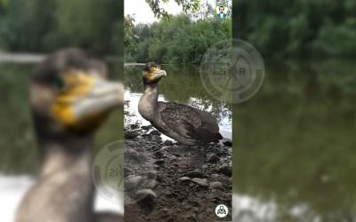 Las aves del Guadalquivir en realidad aumentada
