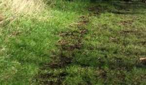 dog grass trail