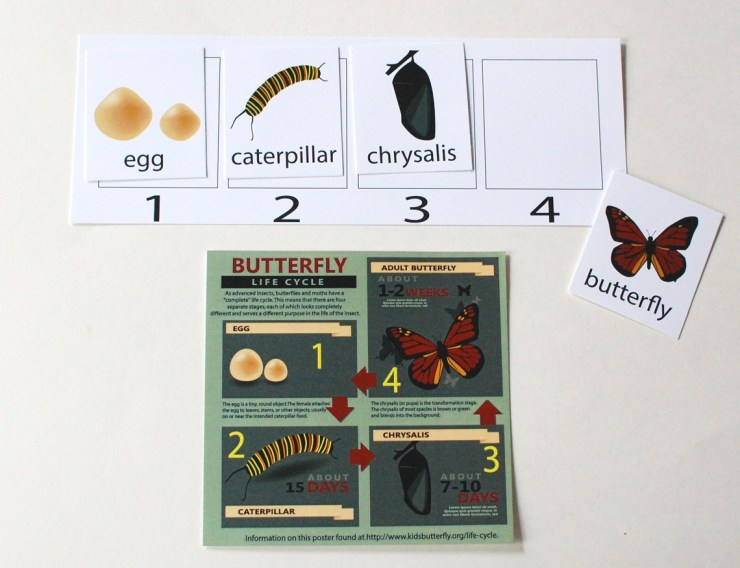 M is for Monster butterfly sequence