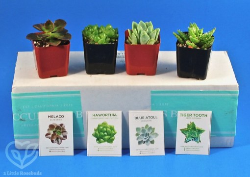 June 2019 Succulents Box review