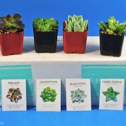 June 2019 Succulents Box review