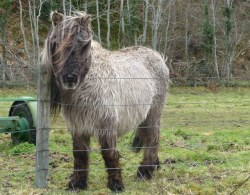 Another shaggy pony, this one was very friendly.