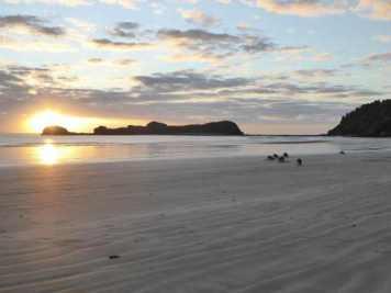 Kangaroos feeding on the beach at sunrise.