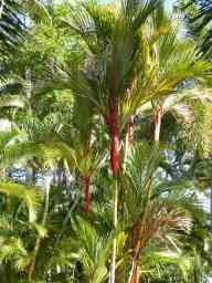 Gorgeous palms in the Caravan Park.
