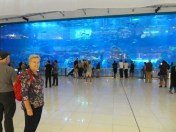 Aquarium in the middle of the Dubai Mall