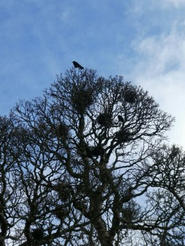 Crows' nests