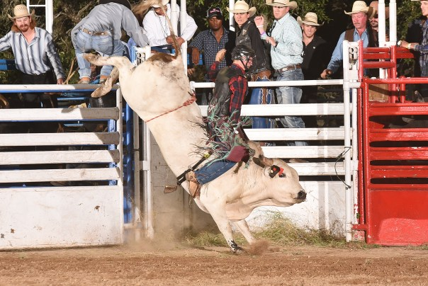 "Cooper Davis on his way to winning the 2015 Helotes Festival Association Bull Blowout. Davis would mark 84.5 points for this ride on JD Nix's T82 ""Lowland Grizz"" to earn $2,536.00 and a championship buckle by SB Western Silver. Photo courtesy of Kierce Photography"