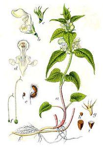 Schmetterlingsblütengewächse