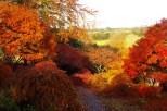 Autumn in Devon by Suzie Gilmore