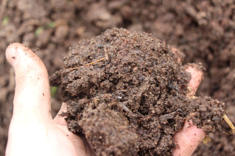 A hand full of compost