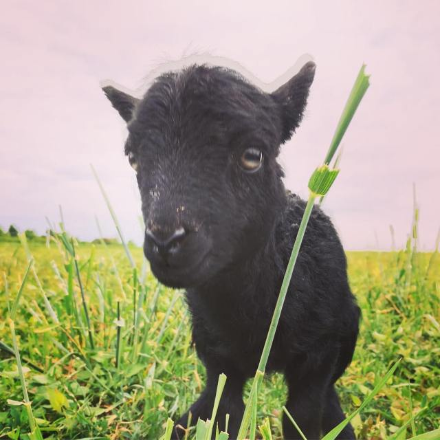 And another lamb  Read more rarr