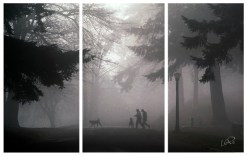 sillohuetts triptych small
