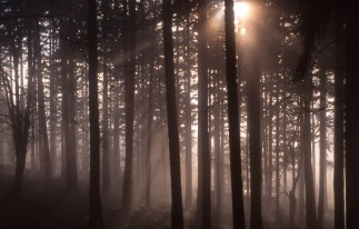 013031504_Fog&Trees