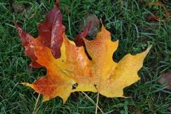leaves 019