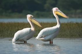tanzania_lake_manyara_pelicans_1
