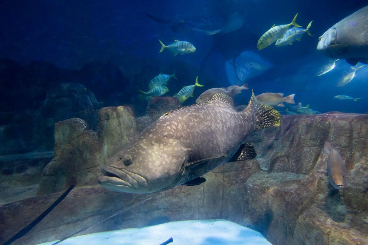 海底世界超神祕,有很多長的很奇怪生物!