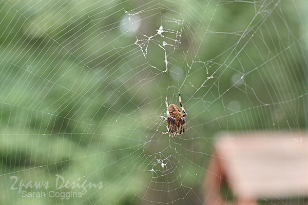 Project 52 Photos: Week 39 – Spider
