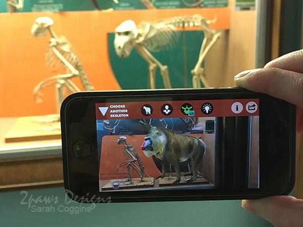 National Museum of Natural History: Bones App