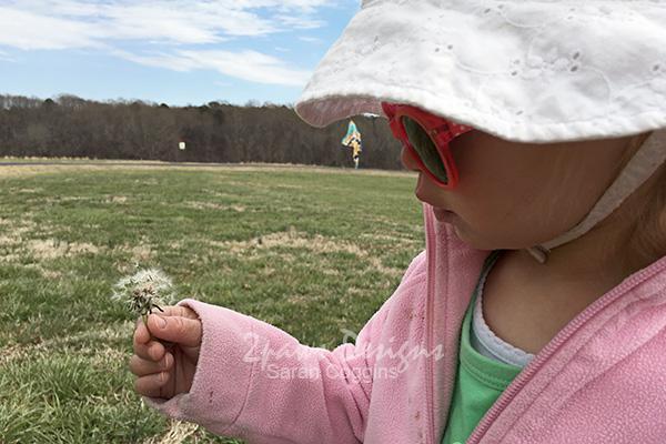 NCMA Park: Dandelion Wishes