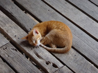 Sleeping kitten!