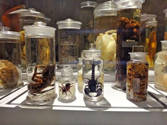 Jars of things...
