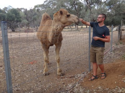 Chris making friends with the camel.