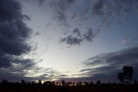 Sunset trees.