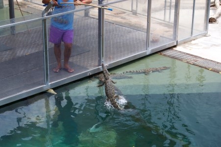 Crocodile fishing!