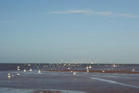 Port Hedland coast.