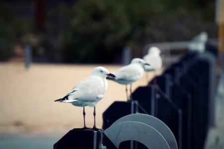 Seagulls, my nemesis.