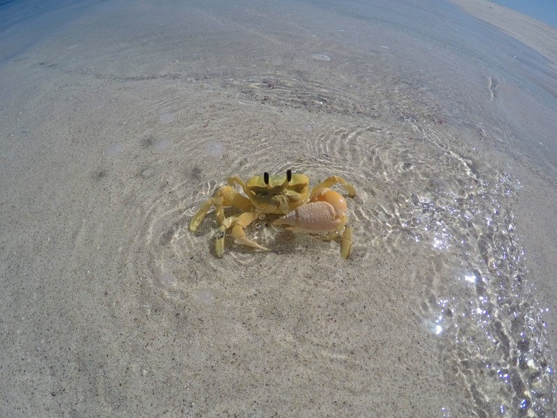 Crab friend!