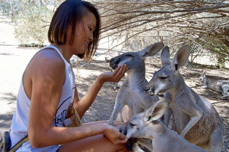 Hungry roos.