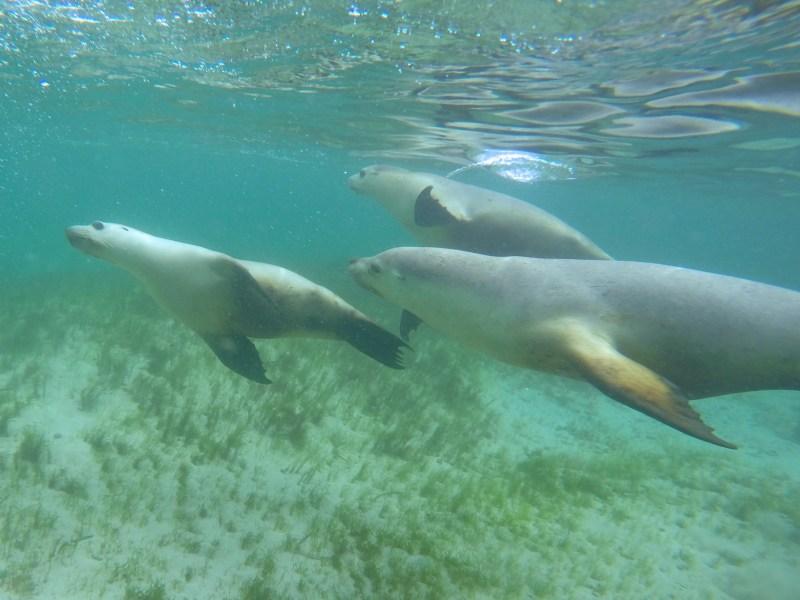 Sea lion family.