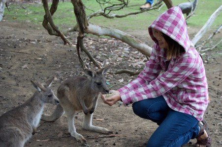 Kangaroo friends!