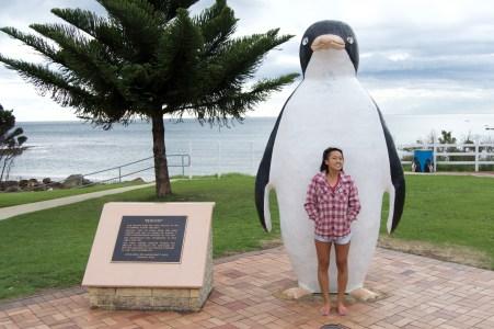 A big pengiun in Penguin.