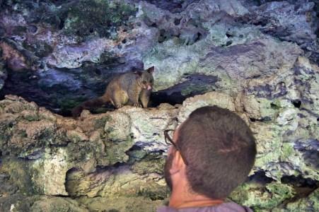 Chris meeting a possum.