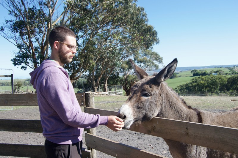 A donkey friend.