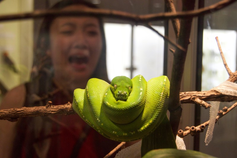 Maddie and a snake.