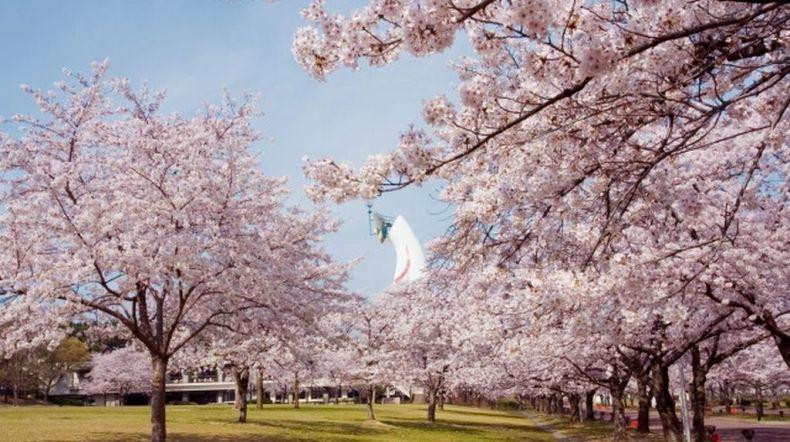 expo-park sakura