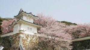 Tatsuno Cherry Festival/ Hyogo @ Tatsuno Park | Tatsuno | Hyogo Prefecture | Japan