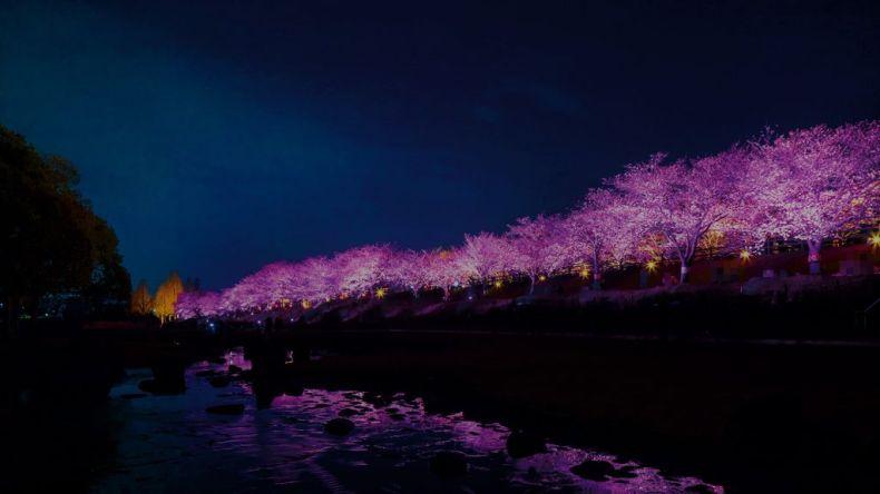 uchiage-gawa ryokuchi park lit up