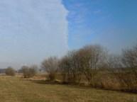 DSCN1274 2011-02-25 bLübbow Schwäne