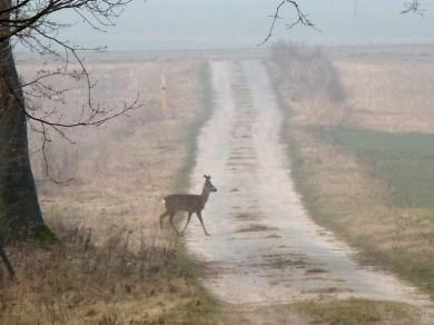 DSCN1796 2011-03-02 bSchwiepke Rehbock