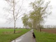 2011-04-13 BöselerWald 037 Birkenallee