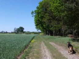 2011-04-30-AmAltenLchowerLandgraben-053-Bongo.jpg