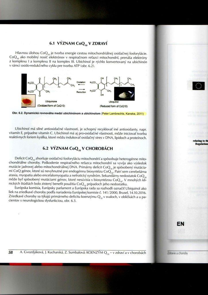 Dynamic equilibrium between Q10 and ubiquinol