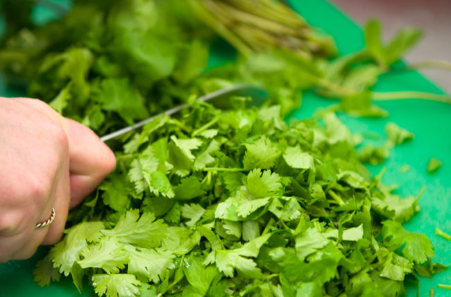 Why Cilantro Must Be Used In Almost All Dishes