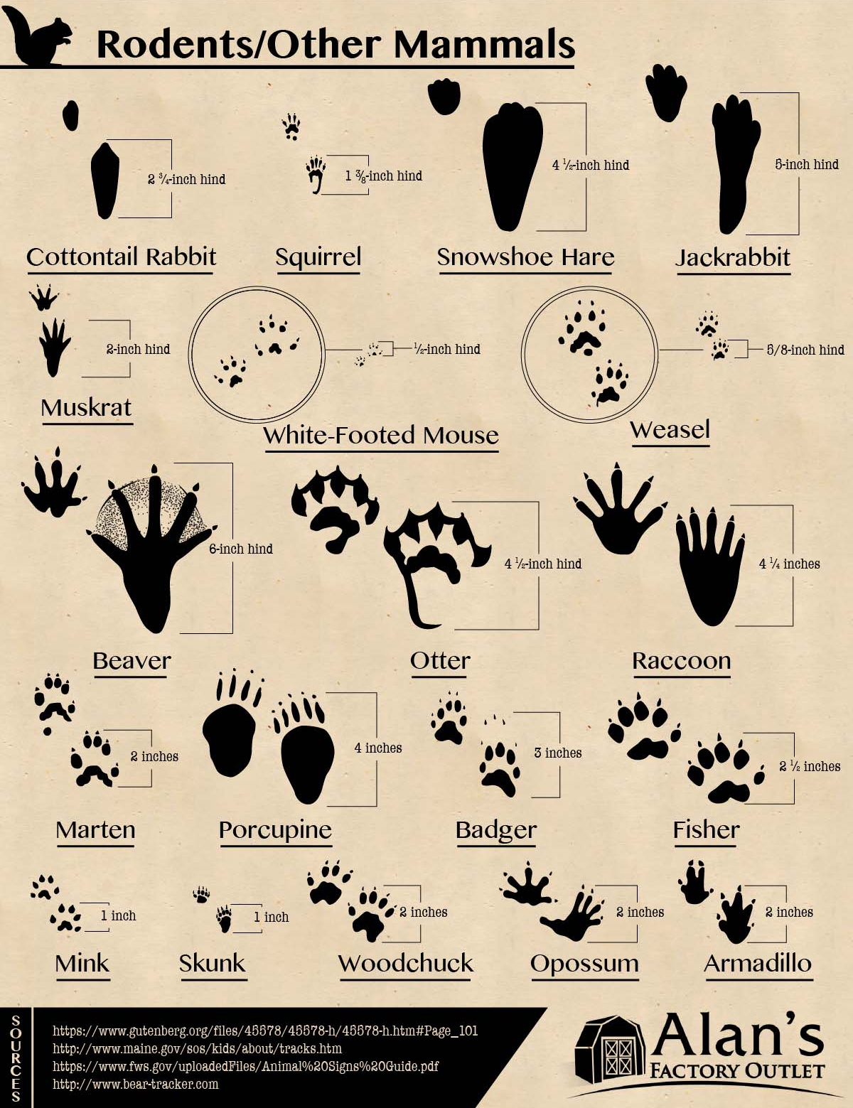 Infographic 50 Animal Tracks Of North America