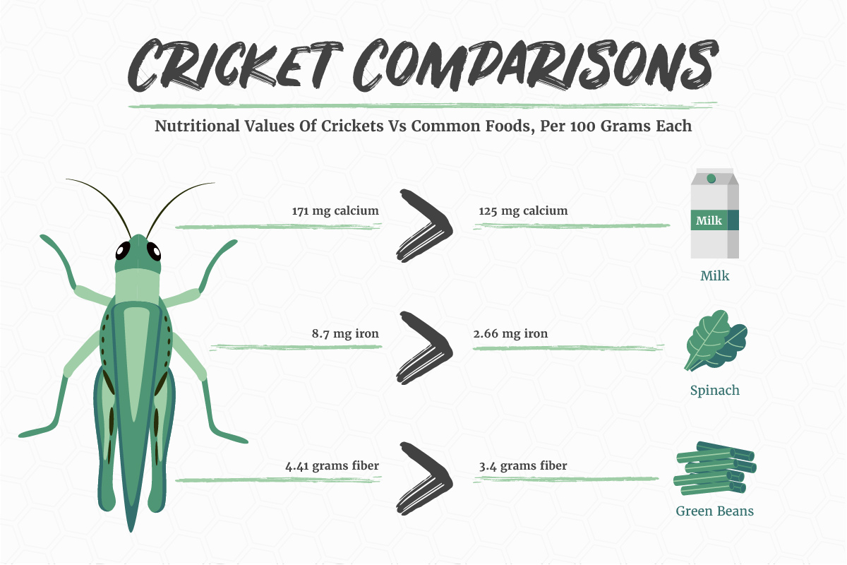 Infographic Nutritional Value Of Insects