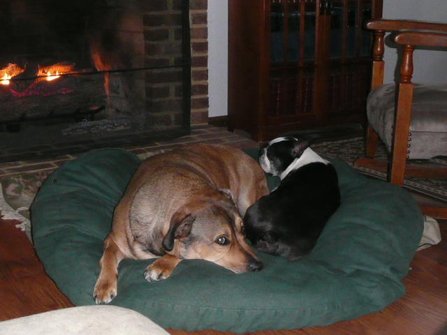 Yin and Yang, by the fire.